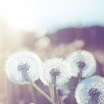 flower-header-2